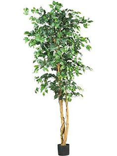 Nearly Natural 5209 Ficus Silk Tree, 6-Feet, Green ❤ Nearly Natural