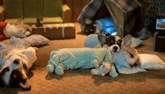 Corgis in pajamas