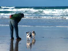 Cornwall beaches, puppies, jack russell