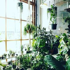 Indoor urban jungle                                                                                                                                                                                 More