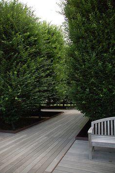 cedar decking or ???? wonderful full arborvitae?    / DIA Beacon