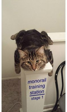Monorail training station #catoftheday