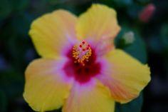 [2012.5.23] / 정적으로 활짝 핀 꽃..X-Pro1    아름다운 것을 보면 마음이 정화되는 기분이 들 때가 있습니다.    이렇게 예쁜 꽃을 보고 고귀한 것에 대해서 생각해보는 건 어떨까요? ^^    <사진정보>    촬영 모드 - Aperture-Priority Auto   감도 - ISO 200   다이나믹 레인지 - 100%   조리개 - f/1.4   셔터스피드 - 1/550   초점 거리 - 35.0mm   화이트 밸런스 - AUTO   필름 시뮬레이션 - Velvia    http://blog.naver.com/fujifilm_x/150136480397