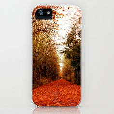 canopy of trees iPhone Case by Sylvia Cook Photography - $35.00