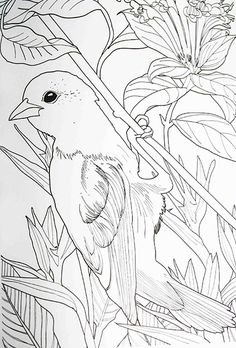 1000 ideas about anti stress on pinterest coloring for Anti chats jardin