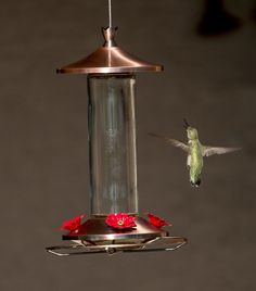 """Love this """"Love Hummingbirds?  We do too :) You'll love this Brushed Metal and Glass Hummingbird Feeder.                    It Attracts Hummers Like Crazy and  its the perfect gift idea for moms, grandmas, women, hummingbird lovers or even yourself :)    #hummingbird #hummingbirds #hummingbirdfeeder #hummingbirdgifts #WeLoveHummingbirds Glass Hummingbird Feeders, Humming Bird Feeders, Brushed Metal, Hummer, Sun Catcher, Classic Beauty, Easy To Use, Red Flowers, Super Easy"""