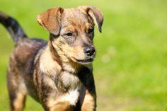 Puppy cursus @ Suzanne Voskuil