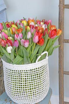 Spring feelings with a bucket of mixed tulips! Tulip Bulbs, Sunflower Wallpaper, Bulb Flowers, Flower Farm, Daffodils, Dahlia, Beautiful Flowers, Bucket, Feelings