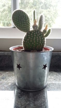 Cactus Cactus, Planter Pots, Plants, Prickly Pear Cactus, Cactus Plants, Plant Pots