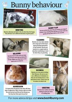 Bunny behaviour http://www.best4bunny.com