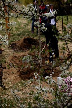 Cada any es planta un nou arbre a l'Arboretum de Viladrau, Osona, Catalunya.