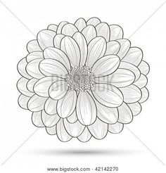 Chrysanthemum Drawings for Tattoos | chrysanthemum drawing chrysanthemum pictures chrysanthemum drawing ...