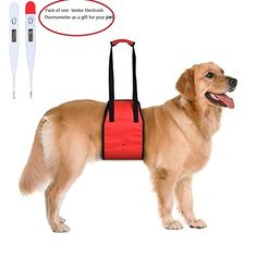 LLH Dog Lift Harness with Handle M Red ** Read more reviews of the product by visiting the link on the image.