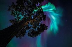 Amazing Northern Lights show tonight in Northern Norway! Would love to see the northern lights before I die. Space Photography, Landscape Photography, Lenticular Clouds, Northen Lights, Northern Exposure, See The Northern Lights, Nature View, Turquoise And Purple, The Mountains Are Calling