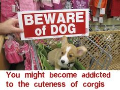 beware of CUTENESS!