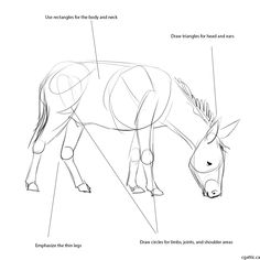 How to draw a donkey step 1: use basic geometric shapes to create the general form. Use the head as a measurement for proportions.