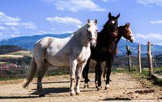 lizenzfreie Fotos Pferde