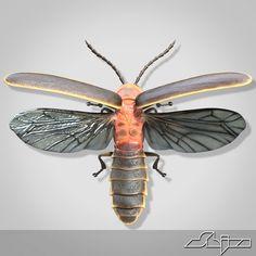 firefly anatomy - Google Search