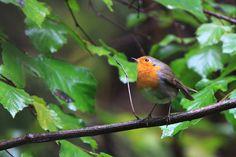 природа, птицы, зелень