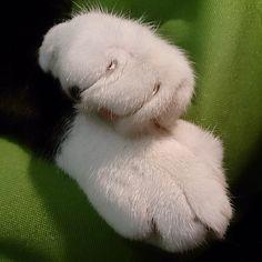 """Kitty paws!!! ~ oscar aka """"oliverelsner"""""""