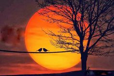 Huge sunset with birds on wire silhouette