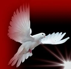 White Dove: Power Animal Symbol of Peace, Love, Maternity, Gentleness. As Spirit Messengers, Dove/Pigeon's gifts include - bringer of peace and love, understanding of gentleness, spirit messenger, communication between the two worlds, maternity, femininity, prophecy. The Dove represents peace of the deepest kind, soothes, quiets our worried and troubled thoughts, enables us to find renewal in the silence of mind. In moments of stillness we are able to appreciate the simple things in life.