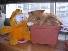 Garfield & Garfield