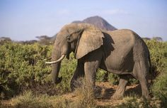 Image result for elephant side view