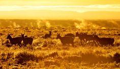 National Wildlife Refuges | The Denver Ear