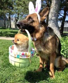 Doggos join me to wish everyone a Happy Easter ! http://ift.tt/2oeMU2P