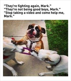 dog fighting funny memes