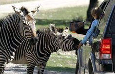 http://topclassnews.blogspot.in/2014/10/10-animals-you-can-find-in-unexpected.html