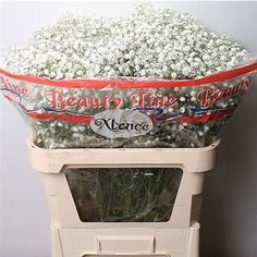 Gypsophila Xlence is a medium to large headed white variety and extremely…