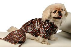 dog clothes  pet clothes  PROMOTION made to measure  by fifime, $36.00