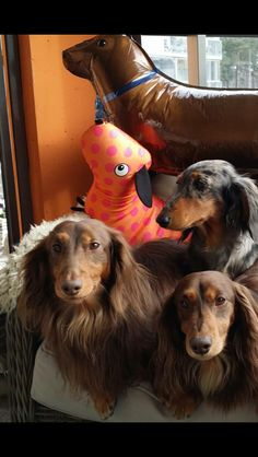❤️ One of these things is not like the other. doxie