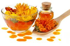 The Benefit of Calendula for Dogs