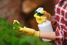 You can use companion planting to eliminate pests without using toxic pesticides. Read more here to learn which plants work side by side. Water Garden, Lawn And Garden, Garden Plants, Diy Pest Control, Companion Planting, Organic Oil, Spray Bottle, Compost, Essential Oils