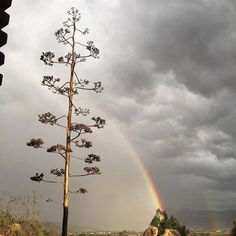 #Ensenada Foto por vallegualifornia