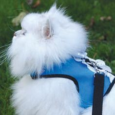 How to make a cat harness (supplies and suggested material list included)
