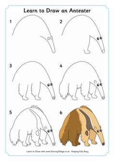 Anteater Coloring Page Worksheets Visual aids and School