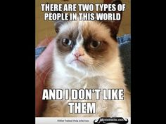 Most Funny Quotes : QUOTATION – Image : Quotes Of the day – Life Quote Grumpy cat funny, grumpy cat meme …For more grumpy cat humor visit www.bestfunnyjoke… Sharing is Caring Funny Quotes, Hilarious Memes, Grumpy Quotes, Funny Humor, Funny Pics, Funny Images, Cats Humor, Funny Stuff, Sarcasm Humor