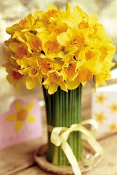 What a perfect bunch of daffodils!