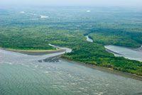 En la mitad sur del Pacífico colombiano predominan las llanuras aluviales y los esteros.