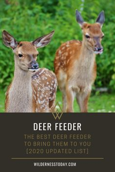 So, whether you're a hunter looking to lure the deer in, or you're a landowner drawing up a vital deer management plan, chances are you're wondering which is the best deer feeder for you. Read more.
