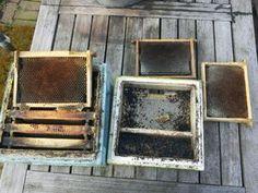 De schoonmaak - Nederlandse BijenhoudersVereniging