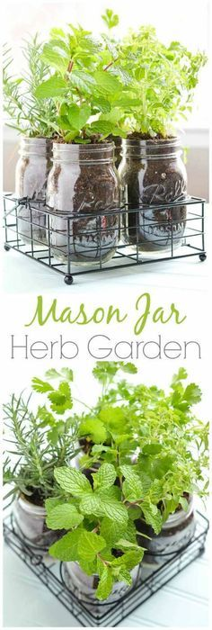 Fun and Easy Indoor Herb Garden Ideas Mason Jar DIY Herb Garden How To Grow Your Herbs Indoor - Gardening Tips and Ideas by Pioneer Settler at .Mason Jar DIY Herb Garden How To Grow Your Herbs Indoor - Gardening Tips and Ideas by Pioneer Settler at . Mason Jar Herbs, Mason Jar Herb Garden, Diy Herb Garden, Mason Jar Diy, Garden Plants, Shade Garden, Plants In Mason Jars, Herb Plants, Window Seal Herb Garden