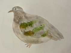Common Bronzewing pigeon watercolour