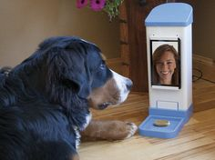 """""""Your dog can hear your voice, see your face and get treats dispensed at your whim. Almost as good as the real thing!"""""""