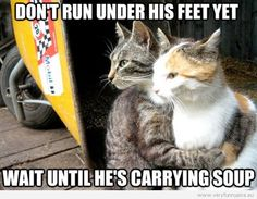 Restraining Cat