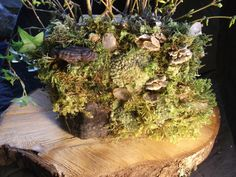 The Moss Purse -- clutch purse coated with a moss landscape and quartz crystals. Can be used as a vase! By Avalon Faire Naturals Booth Ideas, Clutch Purse, Quartz Crystal, Outdoors, Vase, Canning, Landscape, Crystals, Garden